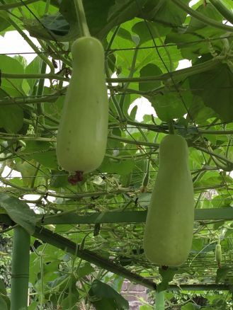 kimberly 2 eggplants