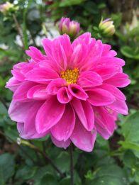 kimberly 3 garden pink
