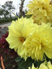 kimberly 3 garden