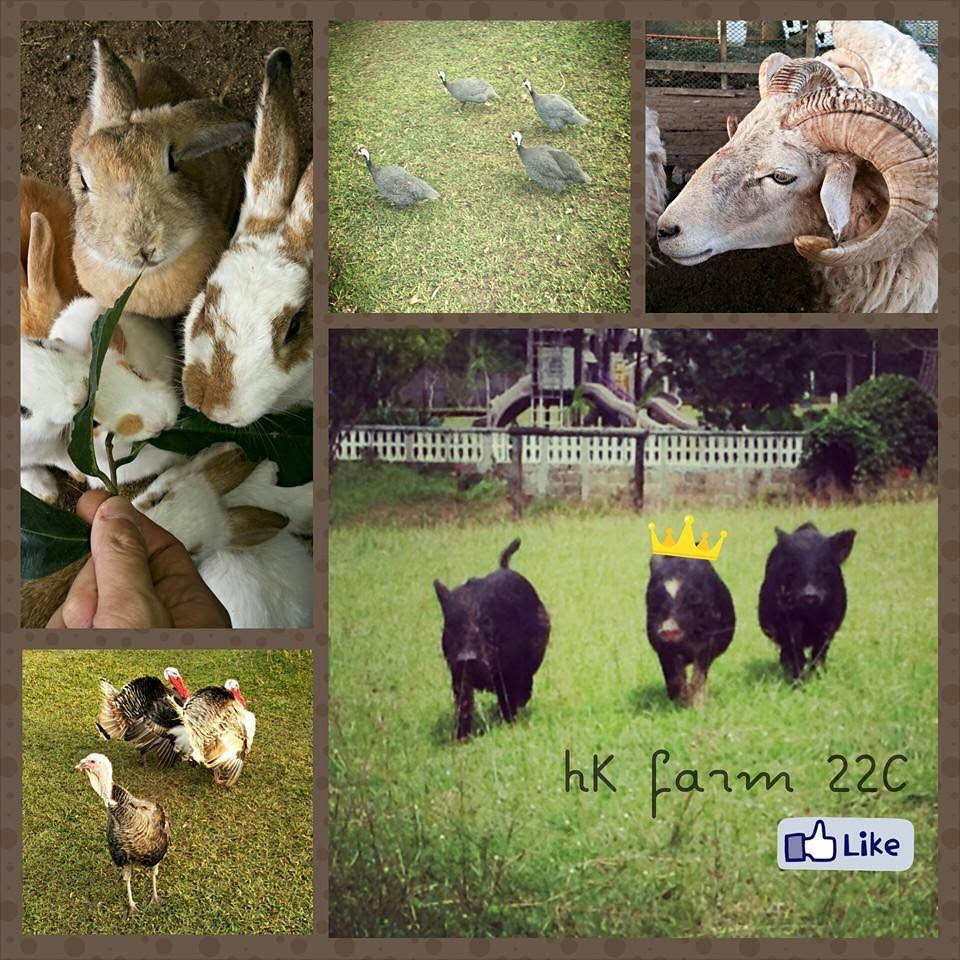 kimberly 5 farm