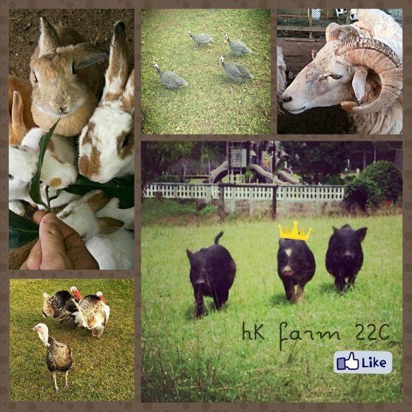 kimberly 5 farm