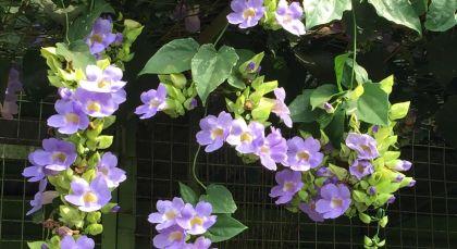 kimnberly 3 purple flower