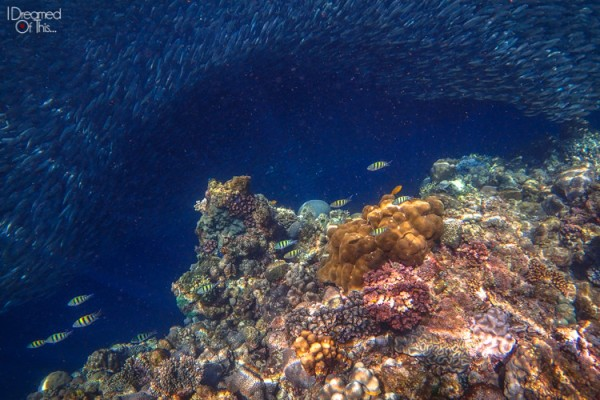 nathan Philippine underwater